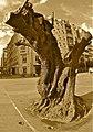 ARBOL ZOMBI - panoramio.jpg
