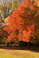 A Crisp Fall Morning (127731729).jpeg