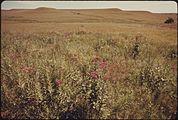 A VIEW OF A PORTION OF KONZA PRAIRIE, 1,000 ACRES OF VIRGIN TALLGRASS PRAIRIE NEAR MANHATTAN, KANSAS - NARA - 557189.jpg
