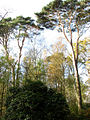 A canopy of trees - geograph.org.uk - 609474.jpg
