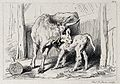 A cow is licking its suckling calf. Etching by C. G. Lewis a Wellcome V0020827.jpg
