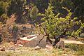 A tree.....in Spain (14014349598).jpg