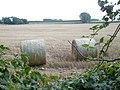 A view through the hedge half way along Homestall Lane - geograph.org.uk - 958893.jpg