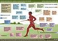 Adaptações do humano para a corrida.jpg