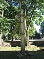 Adomynė, Lithuania - panoramio (19).jpg
