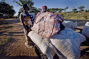 Land reform in Zimbabwe - Many Zimbabweans now rely on humanitarian aid, such as this maize donated by Australia under the aegis of the United Nations World Food Program.