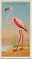 African Flamingo, from the Birds of the Tropics series (N5) for Allen & Ginter Cigarettes Brands MET DP829157.jpg