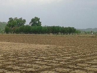 Vidarbha - Farmland in Vidarbha region