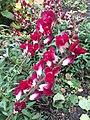 Alaska Botanical Garden ENBLA13.jpg