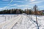 Albeck Seebachern Fahrweg zum Weissen Kreuz 22112017 2062.jpg