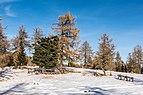 Albeck Seebachern Lärchen Fichten Zirben SW-Ansicht 22112017 2068.jpg