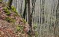 Albtrauf - panoramio.jpg
