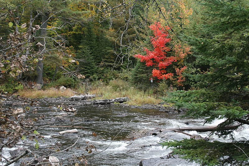 File:Algonquin Park in early fall - panoramio.jpg