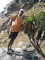 Aloe munchii 4 (4329673117).jpg