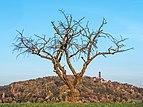 Altenburg-310053-PSD.jpg