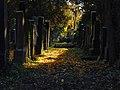 Alter juedischer Friedhof.jpg