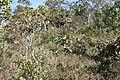 Alto Araguaia - State of Mato Grosso, Brazil - panoramio (475).jpg