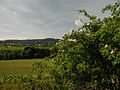 Altstalden Gallenkirch.jpg