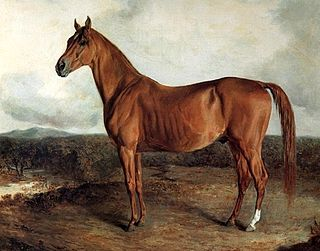 American Eclipse (horse) American-bred Thoroughbred racehorse