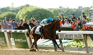 American Pharoah - American Pharoah won the Belmont Stakes to become the 12th winner of the US Triple Crown.