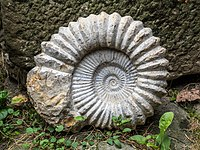 Ammonit-9133155-PS.jpg