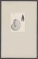 Ammonites spec. - - Print - Iconographia Zoologica - Special Collections University of Amsterdam - UBAINV0274 091 01 0021.tif