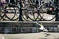 Amsterdam ^dutchphotowalk - panoramio (61).jpg