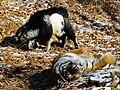 Amur and Timur 009.jpg