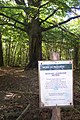 Ancient Beech Tree in Kilndown Wood - geograph.org.uk - 1512894.jpg