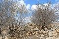 Ancient Shiloh IMG 2956.JPG