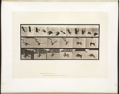 Animal locomotion. Plate 767 (Boston Public Library).jpg