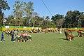 Annual Flower Show - Agri-Horticultural Society of India - Alipore - Kolkata 2013-02-10 4732.JPG
