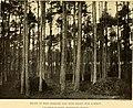 Annual report (1901) (14749833412).jpg