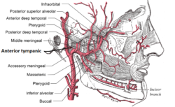 Anterior tympanic artery.png