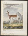 Antilope dama - 1700-1880 - Print - Iconographia Zoologica - Special Collections University of Amsterdam - UBA01 IZ21400097.tif
