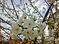 April Flowers.jpg