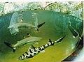 Aquarium Zoologischer Garten Berlin - Wildlife ^ Zoo Photography - panoramio (1).jpg