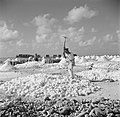 Arbeiders aan het werk in de zoutpannen op Bonaire, Bestanddeelnr 252-8398.jpg