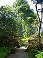 Ardkinglas Woodld Garden (2).JPG