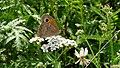 Artenvielfalt im LSG Oldhorster Moor 16.jpg