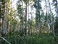 Asinovsky District, Tomsk Oblast, Russia - panoramio (190).jpg