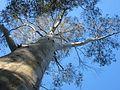 Aussie Tour 2007 (1653041879).jpg