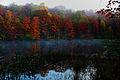 Autumn-foliage-morning-fog - Virginia - ForestWander.jpg