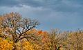 Autumn (1992571380).jpg