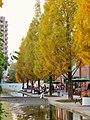 Autumn Leaves in Noritake Garden - 1.jpg