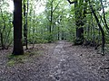 Balade en Forêt de Verrières le 20 août 2017 - 012.jpg