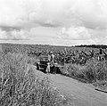Bananenplantage in Guadeloupe, Bestanddeelnr 252-4184.jpg