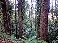 Barisan pepohonan.jpg