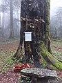 Base dell'albero dei tri cruci in zona niviere a Serra San Bruno nel parco delle Serre (agosto 2018).jpg