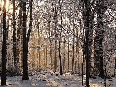 Beech forest Mátra in winter.jpg